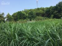 cần bán dt 4500m2 đất ở tại xã yên bài huyện ba vì tp hà nội giá 195 triệu1 sào