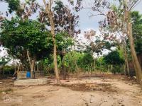 bán đất mặt tiền đại lộ bình dương thị xã bến cát bình dương diện tích 21x93m
