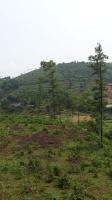 bán mảnh đất 12 ha 12000m2 xã đông xuân quốc oai đất view đẹp thích hợp xây biệt thự phân lô