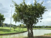 đất thổ cư 100 giá chỉ 11 triệum2 ngay sân golf quốc tế lh xem đất 0901482229