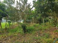 chỉ với 550 triệu có ngay 800m khuôn viên trang trại nhà vườn tại lương sơn hòa bình