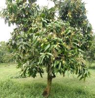 cần bán gấp 9 sào đất vườn cây ăn trái tại ấp 5 xã xuân tây h cẩm mỹ t đồng nai