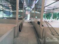 bán trang trại 7 ha tại xã tiến bộ yên sơn tuyên quang