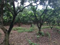bán đất giá rẻ chỉ 270 triệusào sổ đỏ chính chủ đất nở hậu tại yên bài ba vì hà nội