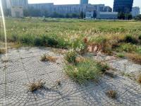 bán đất mt cao l q8 5x18m giá 1 tỷ 2 shr vị trí đắc địa ngay bệnh viện trường học 0902236311