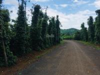 Cần bán 99999m2 tại Buôn Ma Thuột, tỉnh Đăk Lăk LH ngay: 0935 975 676
