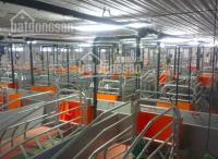 Vỡ nợ bán trang trại hiện đang cho thuê 450 triệu 1 tháng, giá bán 55 tỷ chốt, ĐT 0909,136,007 LH: 0931311926