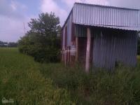 Cho thuê đất hoặc hợp tác làm nông nghiệp tại xã Trường Bình, huyện Cần Giuộc, tỉnh Long An LH: 0985253641
