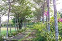 Chính chủ bán gấp lô A84, lô góc view trực diện biển dự án Sunny Villa, LH 0974858886