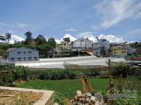 Bán lô đất giá rẻ, bằng phẳng, vuông vắn, đã xây bờ taluy đường Trần Thái Tông - Đà Lạt LH: 0947981166