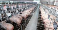 Bán trang trại 8 ha hiện đang cho thuê 450 triệu 1 tháng, giá bán 55 tỷ ĐT 0909,136,007 LH: 0931311926