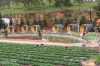 Chỉ 390 triệu sở hữu ngay 5000m2 đất trang trại Bảo LộcThanh táon 4 đợt LH: 0901488849