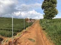 đầu tư giai đoạn đầu giá chỉ 300 triệu tại đất bảo lộc đầy đủ tiện ích vị trí đẹp