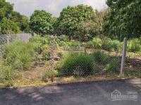 bán 980m2 đất vườn thích hợp xây nhà vườn nghỉ dưng tại hưng định 10 thuận an bình dương