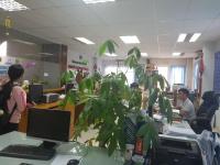 tòa nhà văn phòng building office ở d1 bình thạnh cho thuê dt 80m2 90m2 170m2