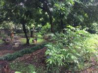 chi tiết Cần bán khuôn viên hoàn thiện đẹp, view thoáng tại Thủy Xuân Tiên, Chương Mỹ, Hà Nội LH: 0384556888