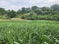 bán 2100m2 đất trang trại nhà vườn vị trí tuyệt đẹp tại xã yên bài ba vì hà nội