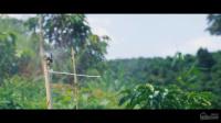 Bán dự án Trang Trại Sinh Thái Lâm Nguyên 4000m2600tr68 cây sầu riêng tại Đam Rông, Lâm Đồng LH: 0815578678