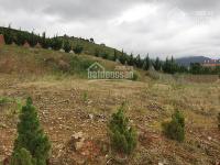 Cần tiền bán gấp lô đất bằng phẳng thích hợp xây biệt thự nghỉ dưỡng huyện Lạc Dương LH: 0942657566