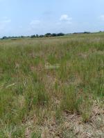 cần bán gấp lô đất thổ vườn đẹp xã phú thạnh nhơn trạch đồng nai sát đường dự phóng giá rẻ