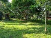 cần bán 7100m2 trang trại nhà vườn tại lương sơn hòa bình
