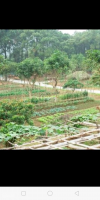 Bán gấp đất trang trại 3hec gần bà nà, có suối đẹp, phù hợp làm mô hình homstay nghỉ dưỡng, đang LH: 0943517815