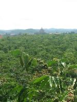 chính chủ cần bán gấp thửa đất đức trọng lâm đồng dt 6000m2 lh 0938713899