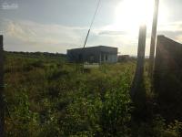 cần bán 24ha đất rẫy có trồng cây điều xoài tại xã phú ngọc huyện định quán tỉnh đồng nai