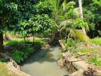 Chính chủ bán vườn trái cây, gần TT Dầu Giây, liền kề KCN, QL1A vào 500m LH: 0388764399