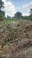 cần bán 1971m2 mặt tiền sông vàm cỏ đất vườn thuộc ấp 1b xã hựu thạnh đức hòa long an