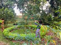 chuyển nhượng khuôn viên nhà vườn nghỉ dưng tại phú mãn quốc oai hn giá 23 triệum2