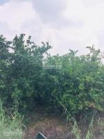 đất vườn trồng chanh tại thạnh hóa la giá 680tr1010m2 shr lh 0909189915 giá còn tl