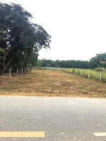 chính chủ bán đất mặt tiền đường bùi thị điệt 125m x 56m 700m2