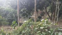 bán nhà đất hòa sơn lương sơn hòa bình 2700m2 giá hấp dẫn