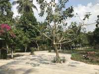 bán 517m2 ngay mặt đường chính trong làng resort cửa lấp làm bungalow quá đẹp