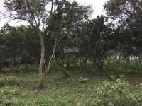 cần bán nhà đất 4ha đã có khuôn viên chưa hoàn thiện đất làm khu nghỉ dưng homestay giá hấp dẫn