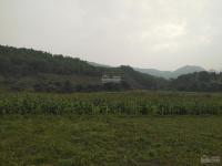 2500m2 đất làm nhà vườn tại yên bài ba vì