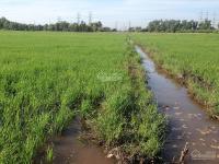 bán đất ruộng diện tích lớn gần đường kênh xã tân thạnh đông củ chi