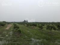 bán trang trại đất vườn dương minh châu tây ninh
