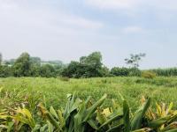 bán 7516m2 đất thổ cư tại xã hòa thạch quốc oai hà nội dt 7516m2