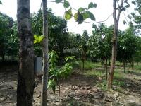 bán lô đất gần rất đẹp tại xã la ngà huyện định quán tỉnh đồng nai