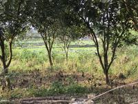 cần bán lô đất 1000 2800m2 tại yên bình thạch thất hà nội đất ở 500m2 view cánh đồng