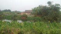 bán gấp 7000m2 đất vườn ở bình mỹ củ chi gần khu dân cư