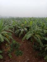 bán 23986m2 đất nông nghiệp tại đại thắng tiên lãng hải phòng