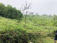 gia đình cần bán gấp 36ha đất rừng sản xuất tại lương sơn