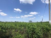 chính chủ cần bán lô đất thổ cư nghỉ dưng 100m2 650tr tại lâm đồng 0931481345