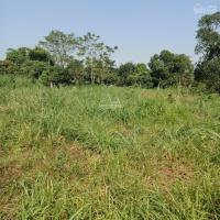 cần tiền bán gấp 3000m2 đất thổ cư đất ở view cánh đồng gía 290trsào