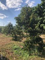 bán đất nông nghiệp chính chủ mô hình vietgap