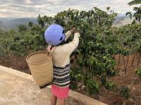 cần bán 500m đất vườn cà phê vạn thành view đẹp nhất