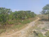 bán đất nhà vườn nghỉ dưng rộng tp bảo lộc tỉnh lâm đồng